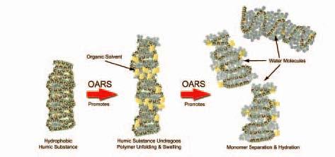 OARSpic2